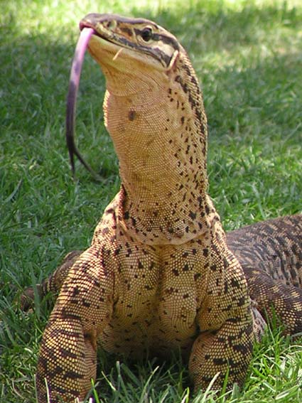reptile farm essential talent entertainment agency in